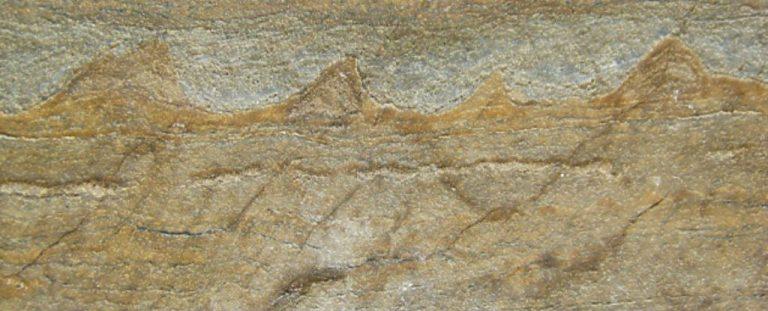 Фосилите, открити в Гренландия, сн. Science alert