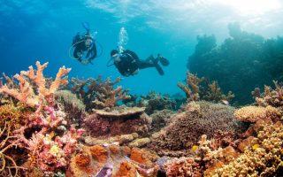 бариерен риф